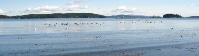 cropped-shoal-harbour-sequential66.jpg