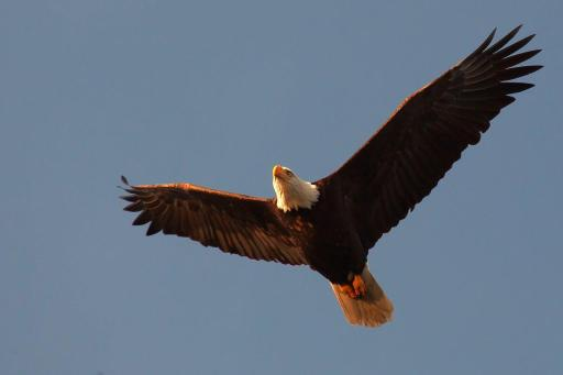 The Beaufort Eagle performs a fly-by of Surfside Point on Christmas Day, 2014. copyright Philip Baardman