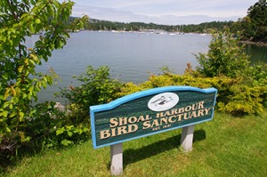 The Friends of SHOAL Harbour are happy Nature Canada is supporting their efforts to raise awareness about the migratory bird sanctuary on the Saanich Peninsula.— Image Credit: Steven Heywood