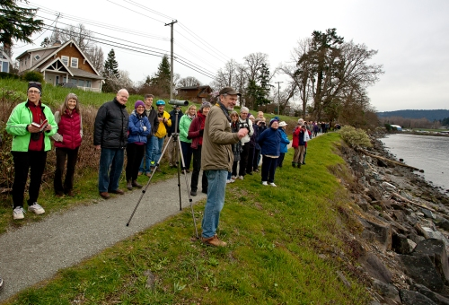 Kerry Finley (foreground) informs the  FOSH Birdwalk attendees about the obliging waterfowl presenting themselves along the Scoter Trail