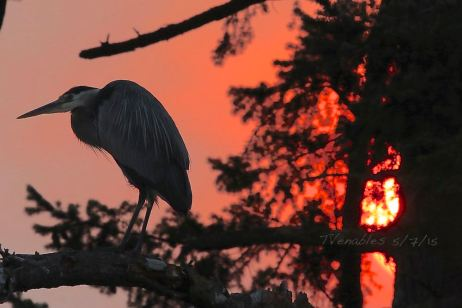 Heron and a smoky sky