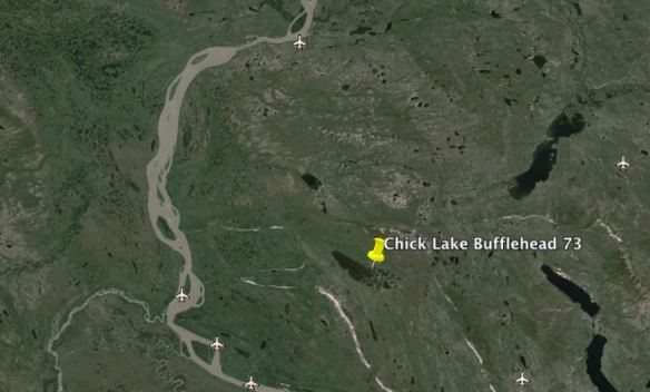 Chick Lake Buffleheads